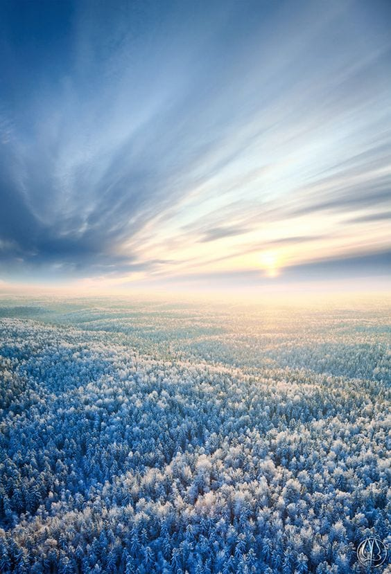 Aerial view of winter forest during sunset.